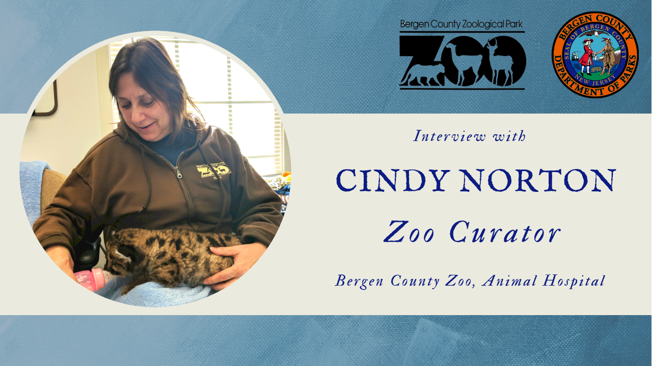 Read more about the article Bergen County Parks Staff Spotlight: Cindy Norton, Zoo Curator